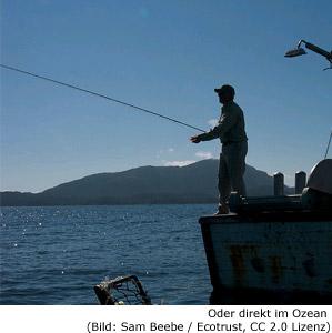 Angeln Fischen Erlaubnis Lizenz Kosten