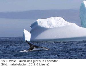 Klima Reisezeit Neufundland Labrador